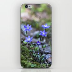 Anemone in forest iPhone & iPod Skin