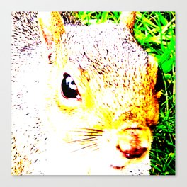 The many faces of Squirrel 1 Canvas Print