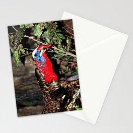 Wild Turkey Close Up Stationery Cards