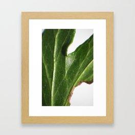 Ivy leaf Framed Art Print