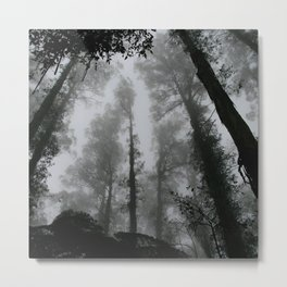 THROUGHT THE NATURE Metal Print