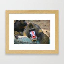 Primate Framed Art Print