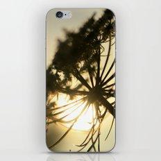 Lace Silhouette iPhone & iPod Skin