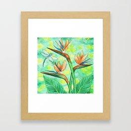Bird-of-Paradise Framed Art Print
