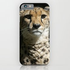 Cheetah Portrait iPhone 6s Slim Case
