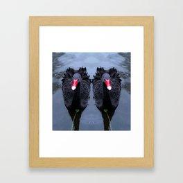 Black Swans Framed Art Print