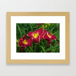 Rich red daylilies Framed Art Print