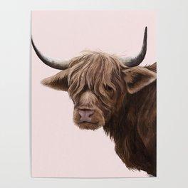 highland cattle portrait Poster