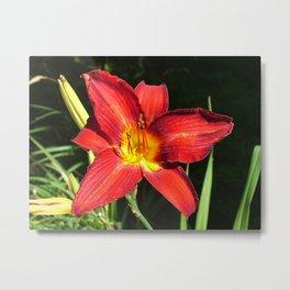Flower Pic 11 Metal Print