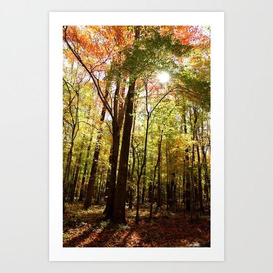 Let the Sunshine In (Autumn Colors) Art Print