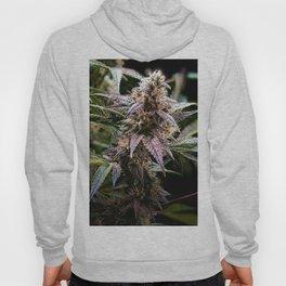 Purple Cannabis Bud in Black Hoody