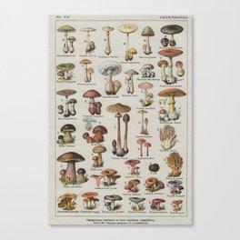Vintage French Mushroom Identification Chart Canvas Print