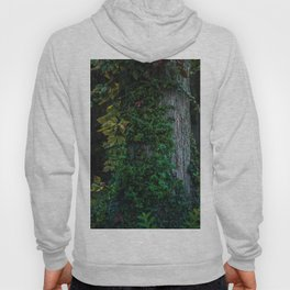 Ivy upon the Tree (Color) Hoody