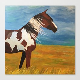 Picasso - Mustang Stallion Canvas Print