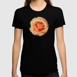 Single rose flower blooming T-shirt