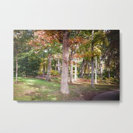 Trees at Wellesley  Metal Print