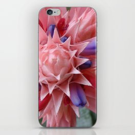 Plant Bromeliad Pink Purple iPhone Skin