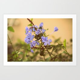 blue flowers !  Art Print