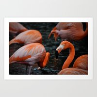Flamingos in the rain Art Print