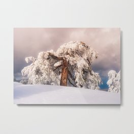 Frost Covered Pine Metal Print