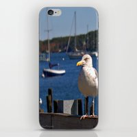 maine iPhone & iPod Skins featuring Maine Local by Catherine1970