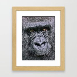 Portrait of a female Gorilla Framed Art Print