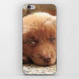 Potter's Cute Beginning: Sleepy Head iPhone Skin