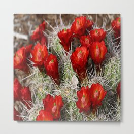 Beauty On Throns Metal Print