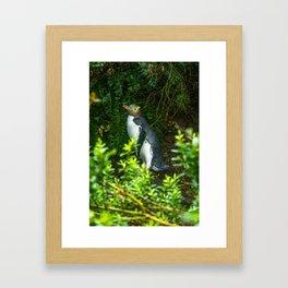 Yellow-Eyed Penguin Framed Art Print