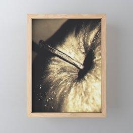 Golden apple (Bone of contention) Framed Mini Art Print