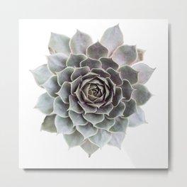 Succulent burst Metal Print