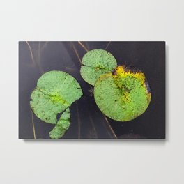 Freckled Water Lillies Photograph Metal Print
