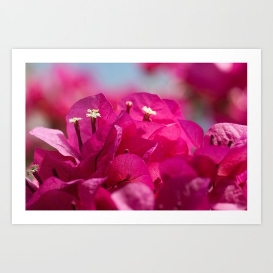 Bougainvillea flowers 843 Art Print