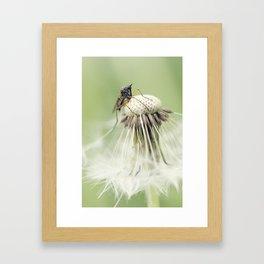 King of the dandelion for a day Framed Art Print
