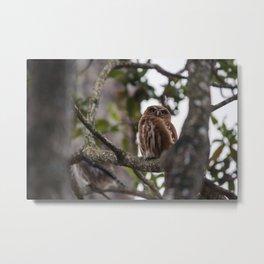 Birds from Pantanal Caburé Metal Print