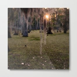 Witch's Hair at Sunrise on the Swamp Metal Print