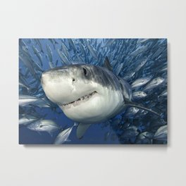 Smiling Great White Shark With Friends Metal Print