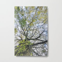 Centenary oak with the trunk covered in moss and green plants Metal Print