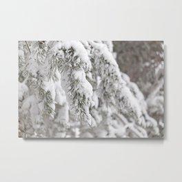 Winter's Pine 5 Metal Print