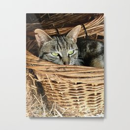 Basket Kitty (Lanai Cat Sanctuary) Metal Print