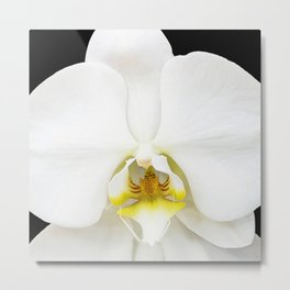 In Black And White Orchid Metal Print