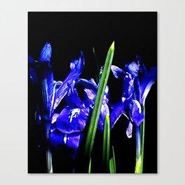 Among the Ladies Artist Series jGibney Irises Canvas Print