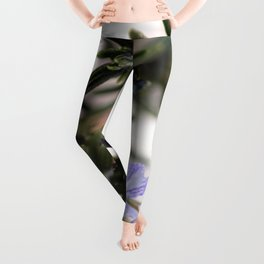Rosemary Leggings