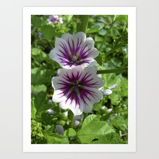 mallow bloom VII Art Print