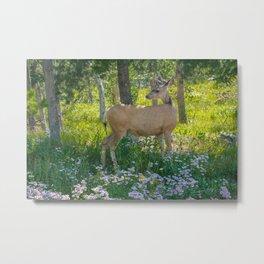Grand Teton Mule Deer Print Metal Print