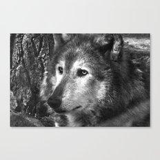 Pondering Wolf Canvas Print
