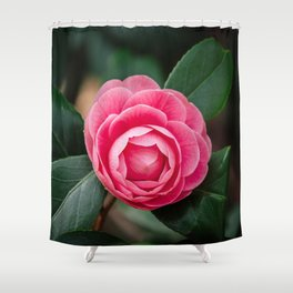 Pink Perfection Camellia Japonica Blooms in Spring Shower Curtain