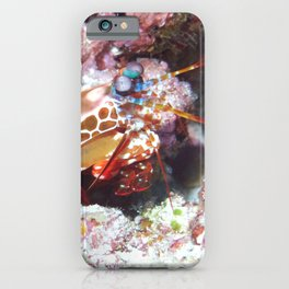 Mantis shrimp (the weirdest animal on the planet) iPhone Case