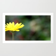 yellow flower. Art Print