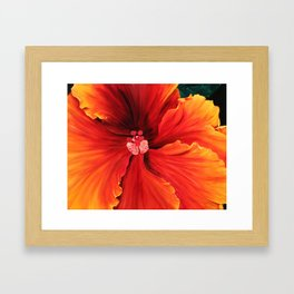 Hibiscus by Melinda Cummings Framed Art Print